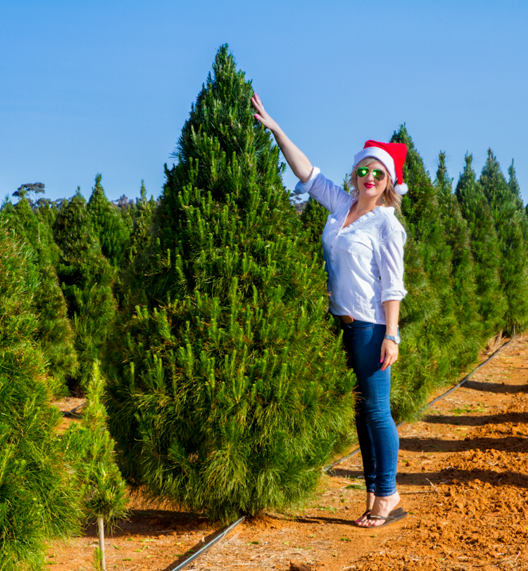 Stands For Real Christmas Trees