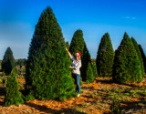 Commercial Large Christmas Trees Melbourne