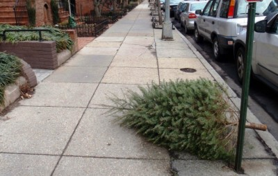 Christmas Tree Removal Melbourne