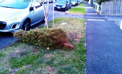 Christmas Tree Collection Melbourne