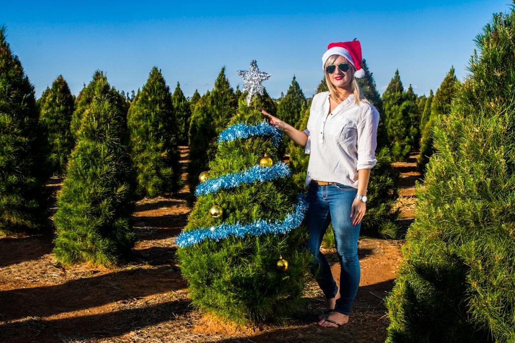 fresh christmas tree - Small Real Christmas Trees