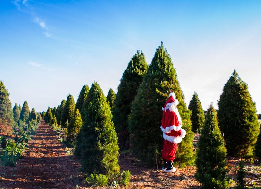 Fresh Christmas Trees Melbourne