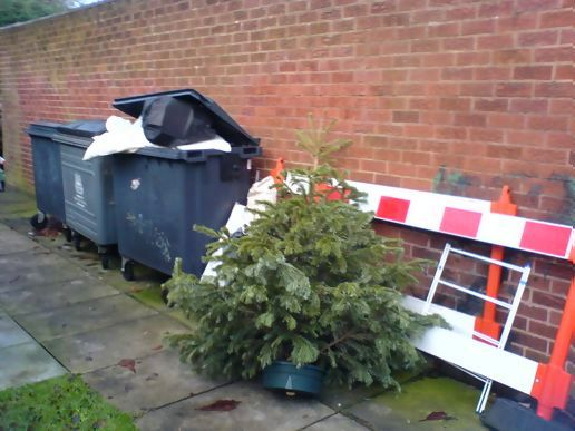 christmas tree collection melbourne - Christmas Tree Removal