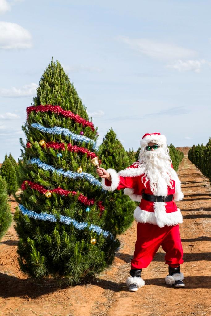 real xmas trees victoria online - Santa Trees