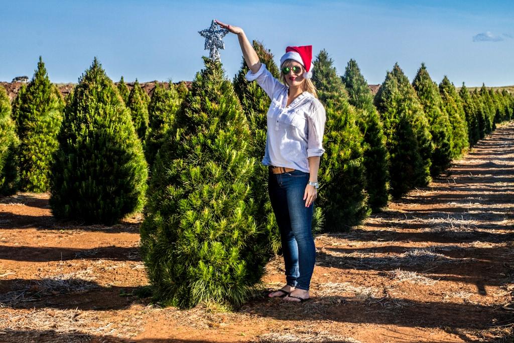 Fresh Xmas Trees Melbourne