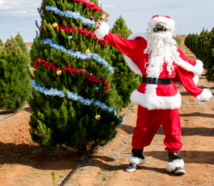 fresh christmas tree melbourne online - Christmas Tree Online
